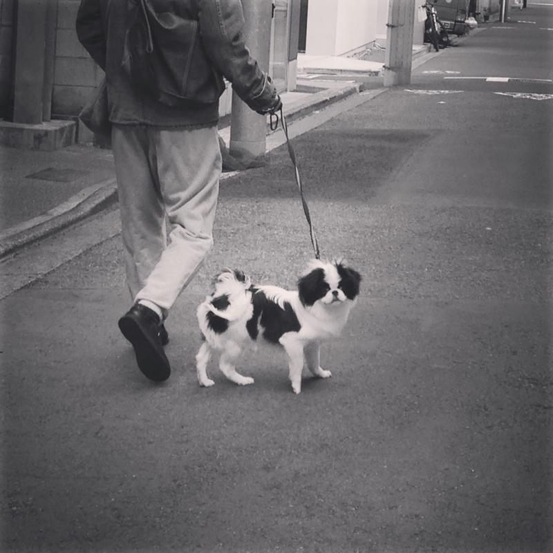 ペットの愛犬ちゃんが