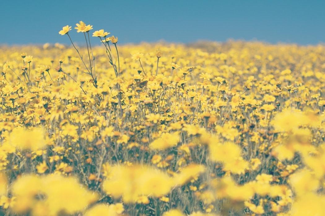 黄色って、合わせにくいイメージです