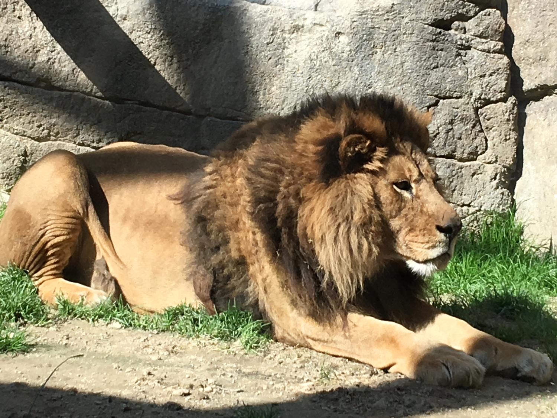 好きになったのはライオン系男子?