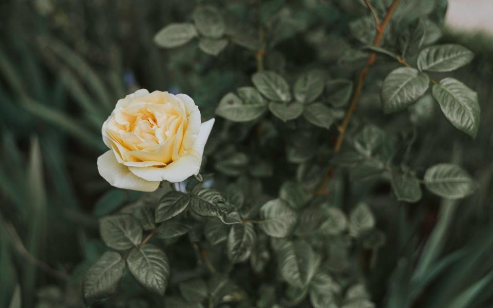 〈愛されPOINT1〉香り