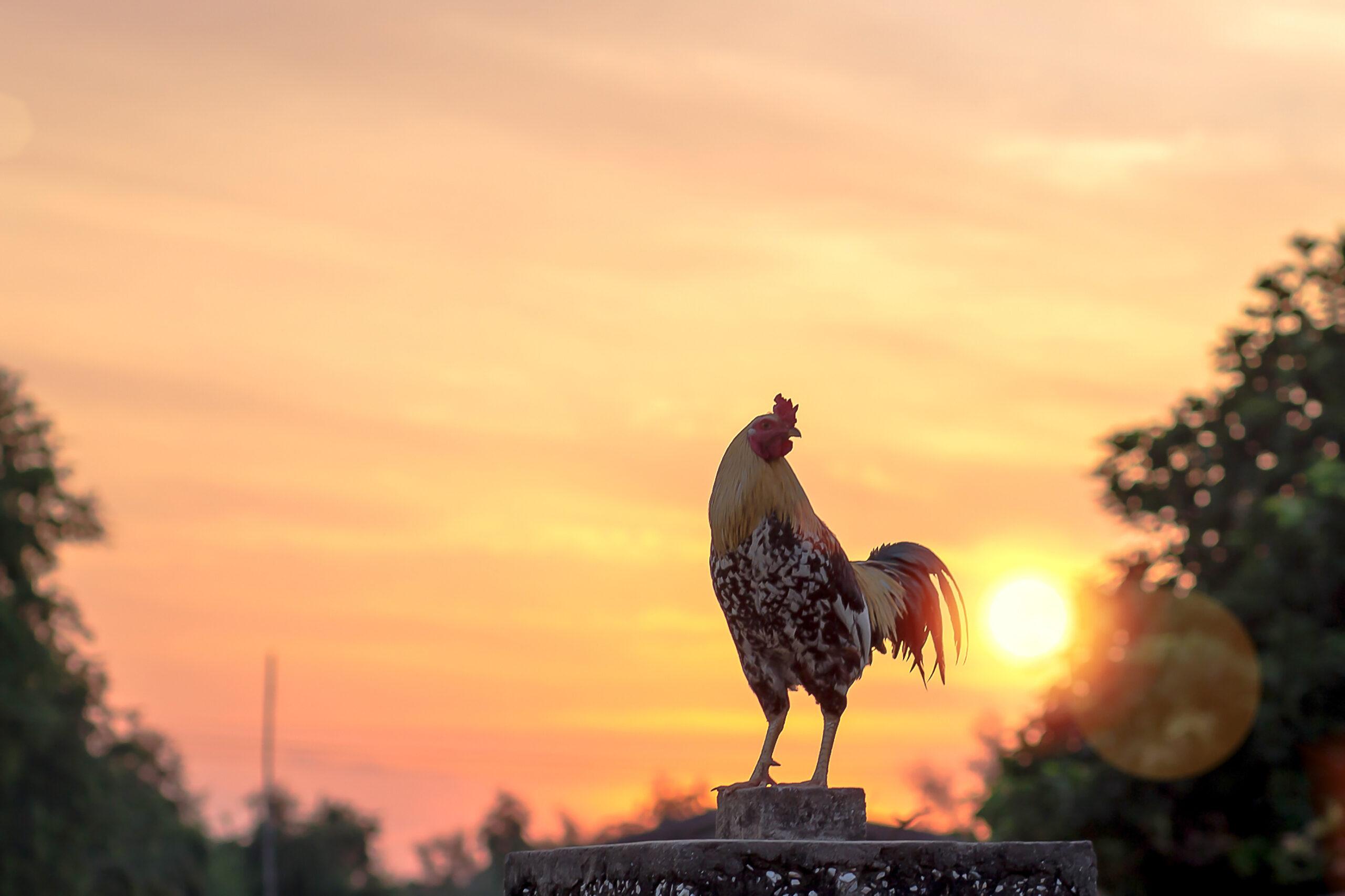 朝早いけど気分良い、早番シフト