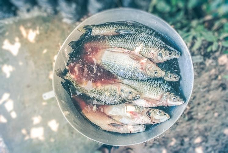 + 魚の三枚おろしの仕方