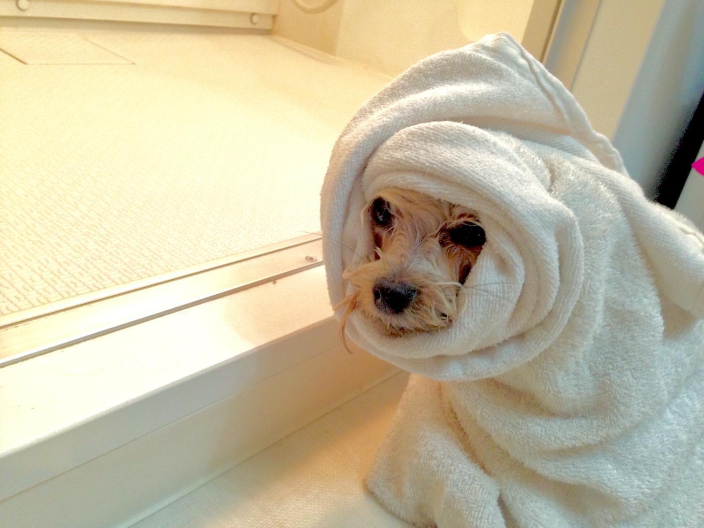 ちゃんと体、洗えてる?