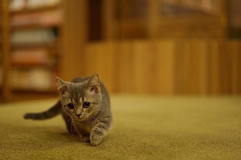 __ まず、猫っ毛ってなんぞや