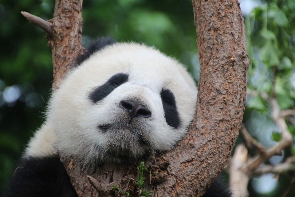 CASE04:パンダ目になります