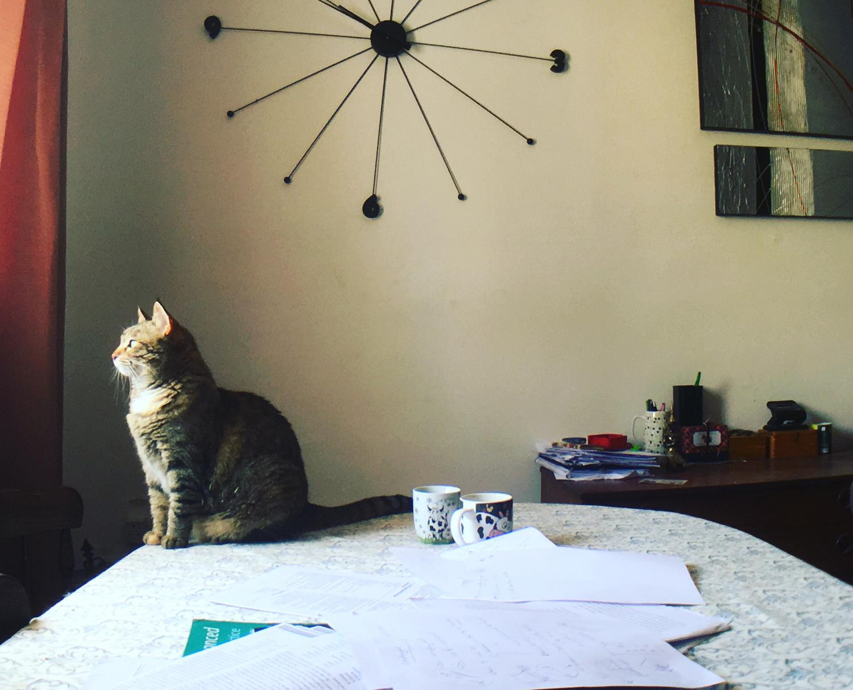 __ 猫背にゃんて、忘れるくらいの綺麗な姿勢