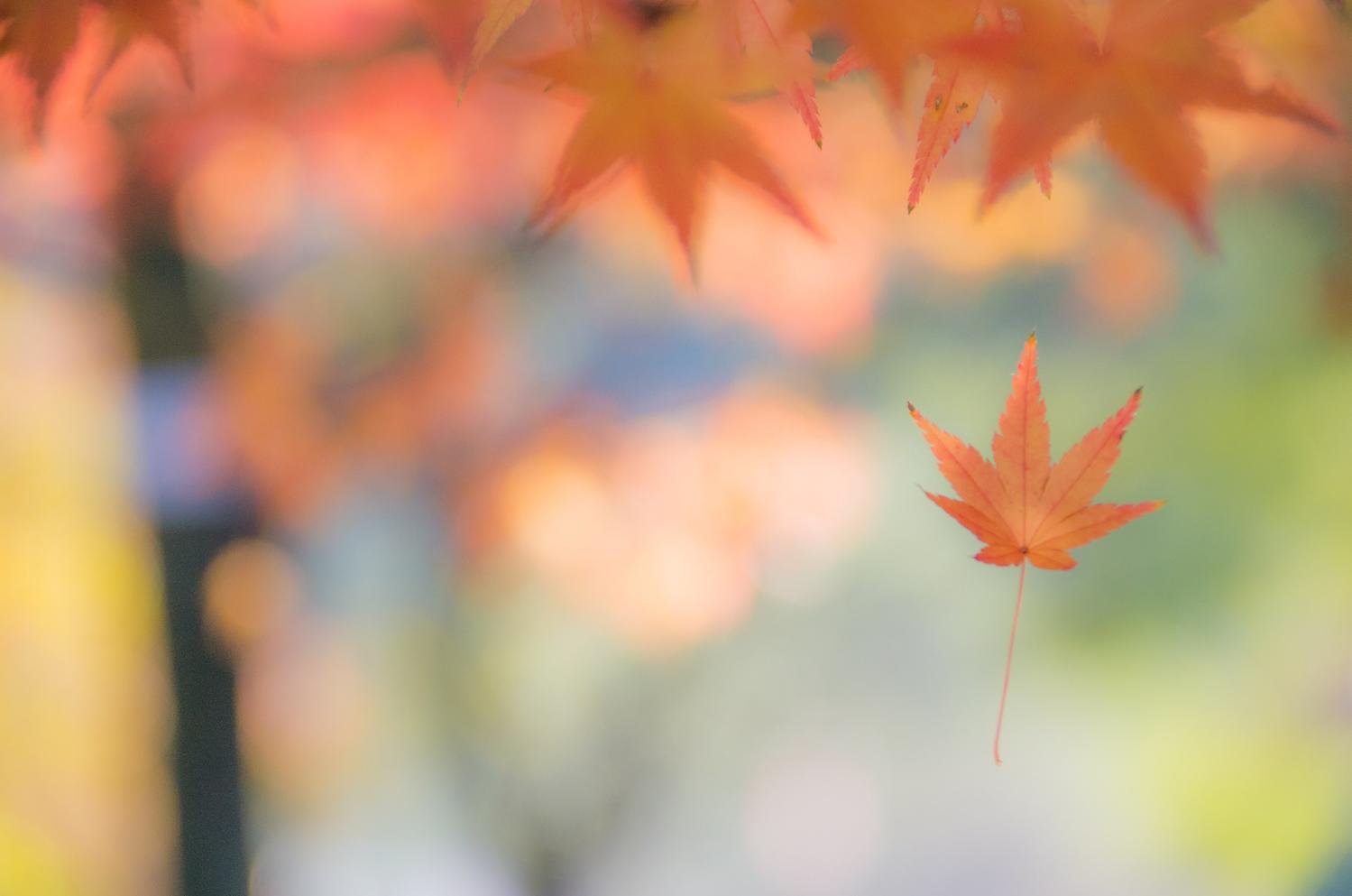 木の葉の色を楽しんで