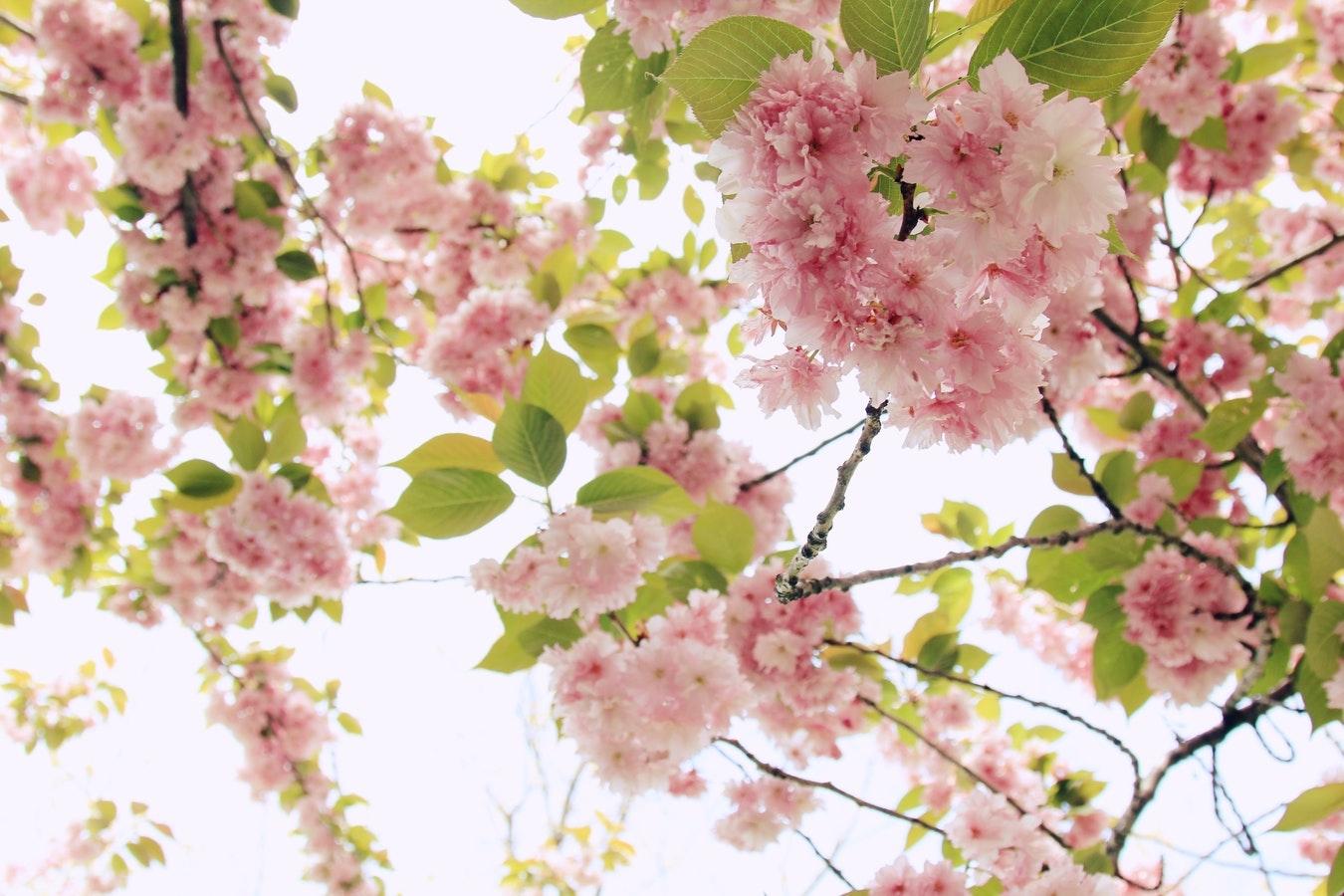 (♡)flower