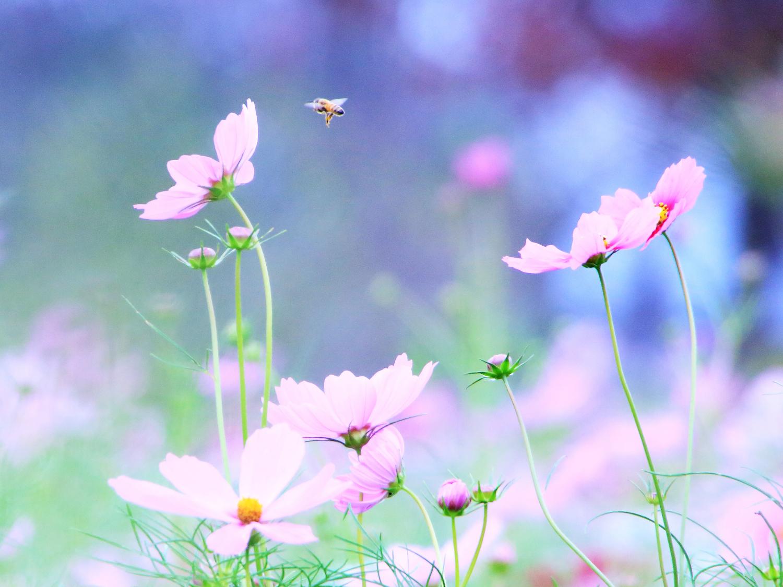 それは花が咲いた時
