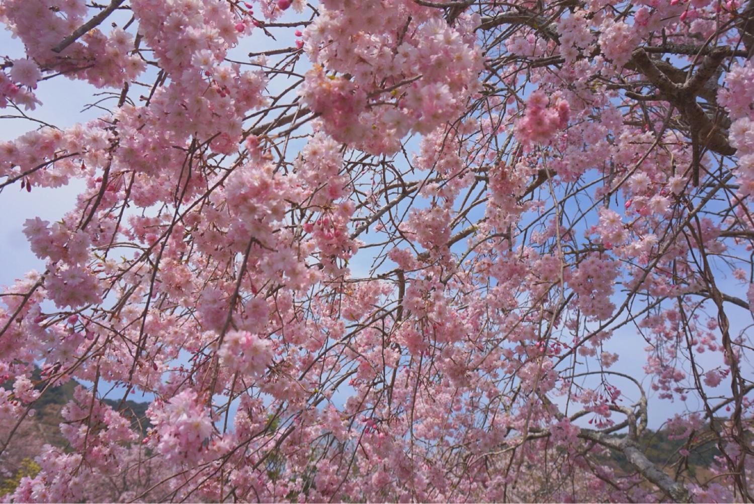 春:甘い香りが漂ってくるスイートな季節