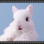 くすっとしちゃう♡新しい鼻セレブの顔に選ばれたうさぎたちからのメッセージ動画