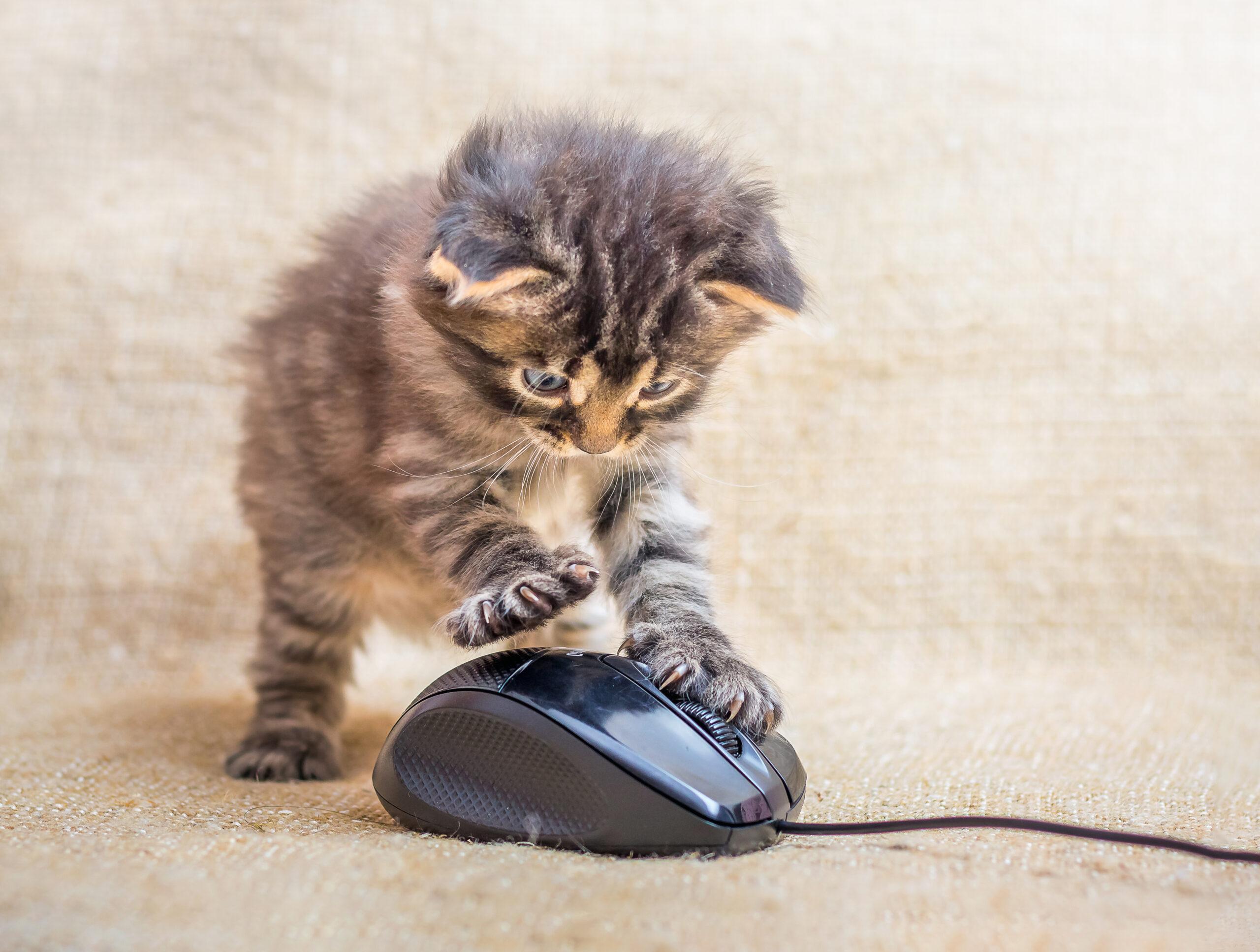 ♡:マウス、なんだかしっくりこない…