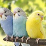 私、鳥派です