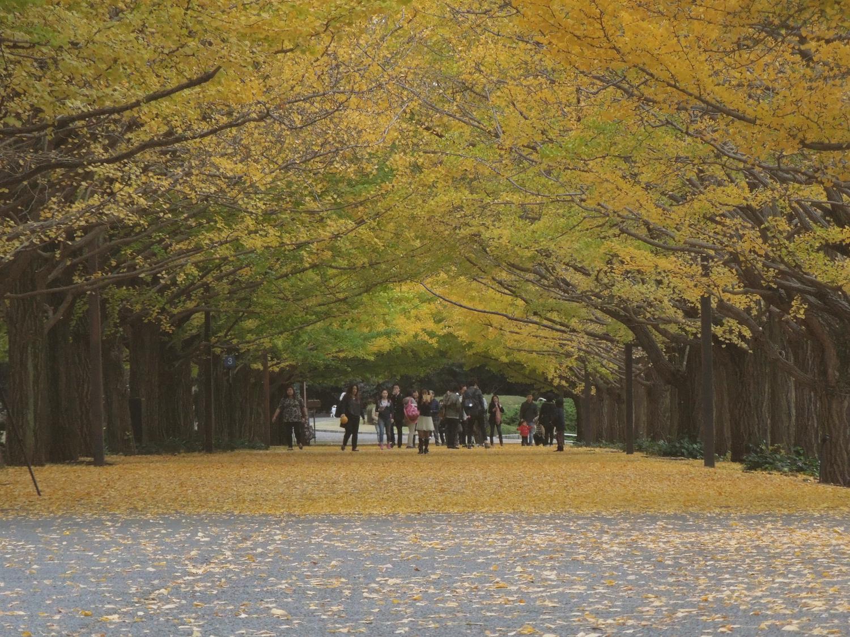『国営昭和記念公園』