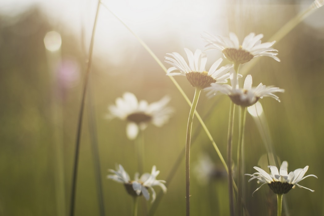 自分をたとえるなら、どんな花?