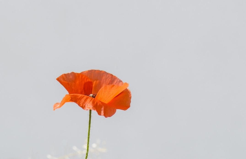 元気な色のお花