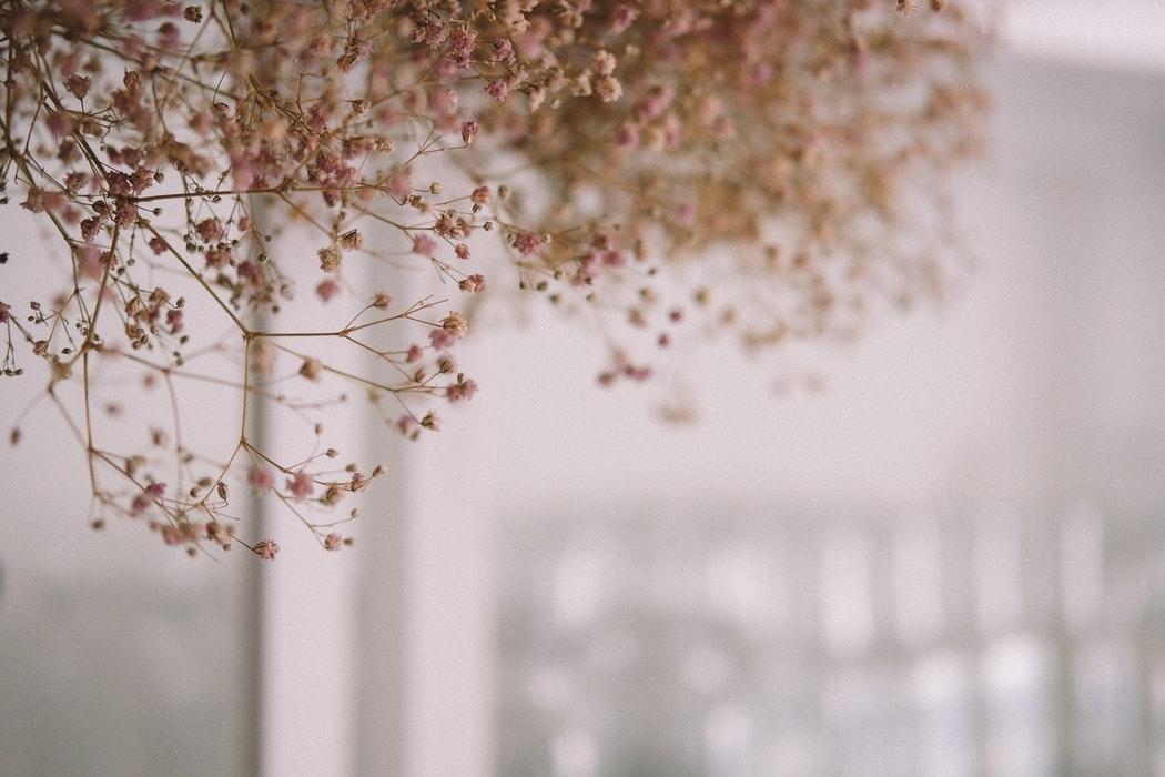 小さくて可愛らしいお花