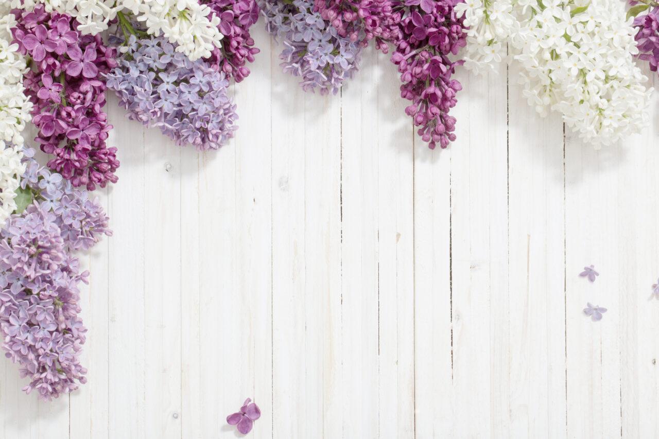 ゼラニウムの花言葉「君ありて幸福」。友人、恋人、家族にとっておきの花を
