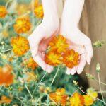 あの花のような女性になろう。誕生花から導く、自分にピッタリの女性像とは?