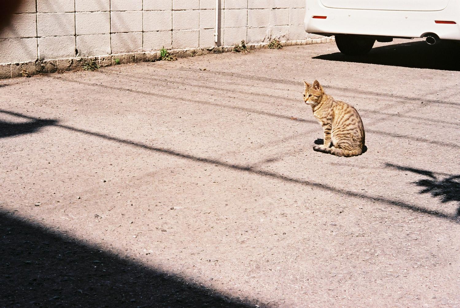 ◻︎ 猫背を矯正して姿勢を正す