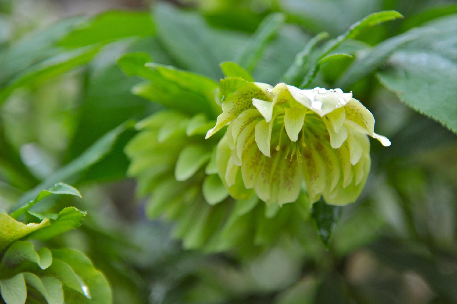 疲れ目には緑の花