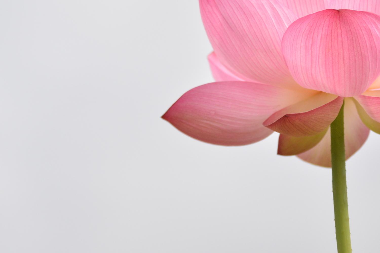 若さを保つピンクの花