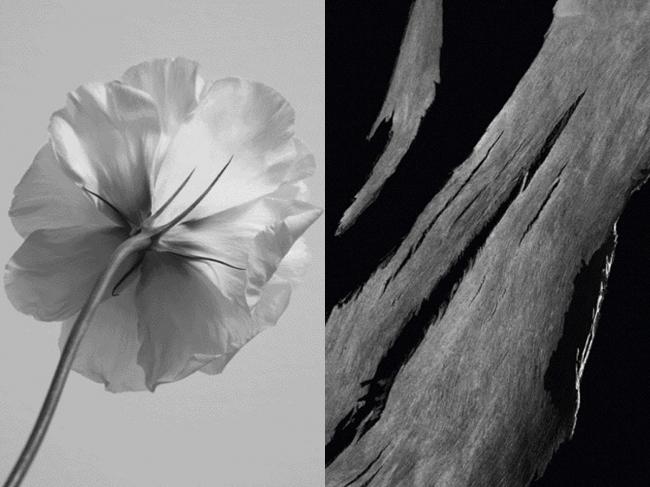 「白と黒」が融合した禁断の香り