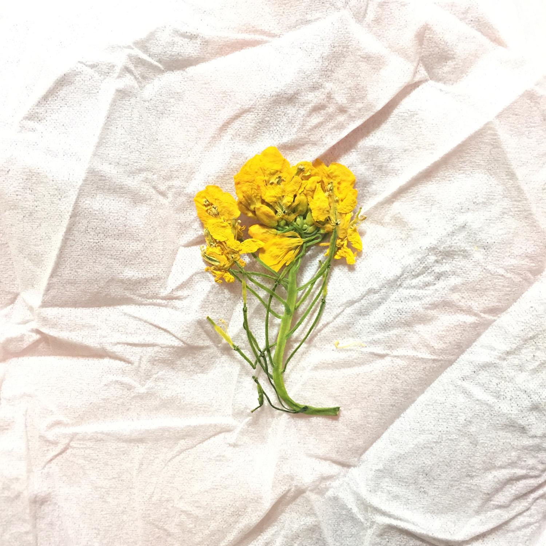 押し花って可愛いよね