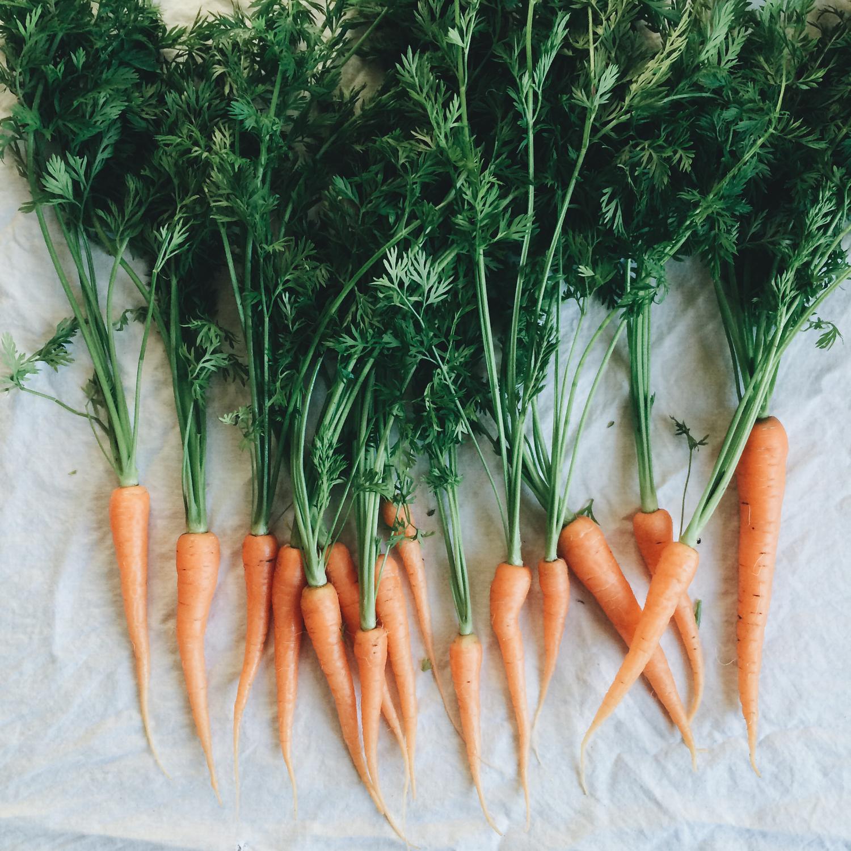 野菜をたくさん摂ろう