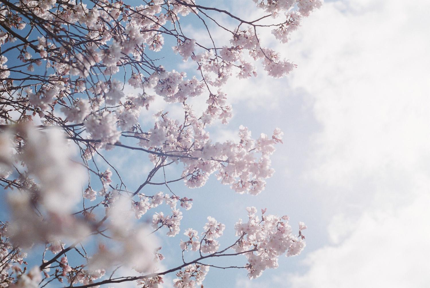 :春は映える季節だから