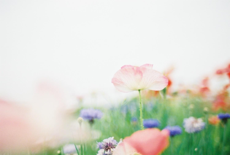 春が待ち遠しいねっ