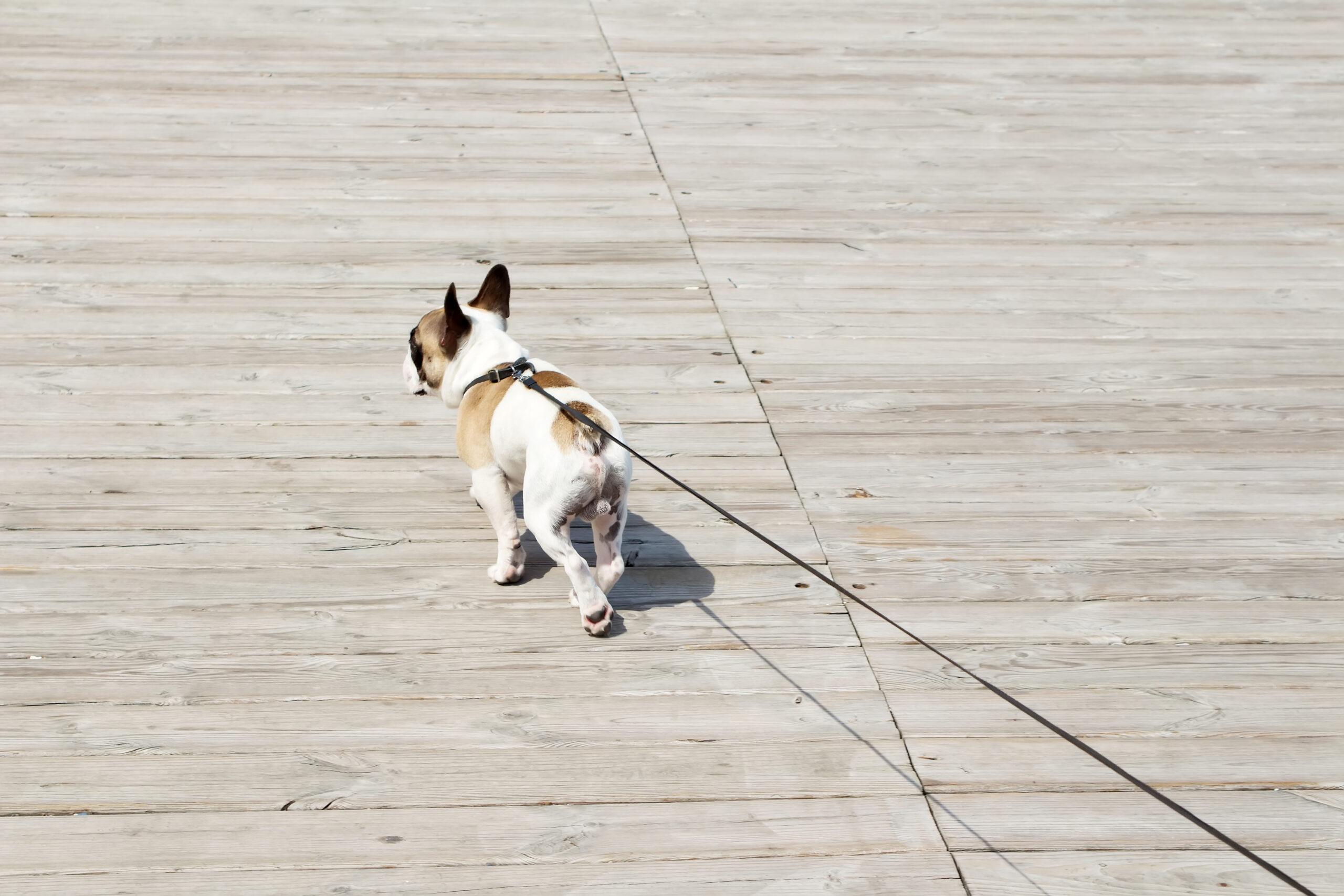 愛犬と一緒ならがんばれそう♡