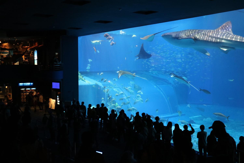 scene 2|水族館デート