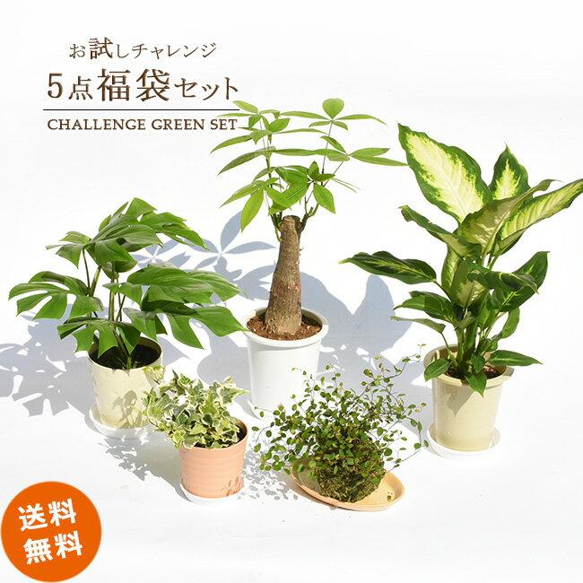 お試し5点セット 卓上サイズ観葉植物