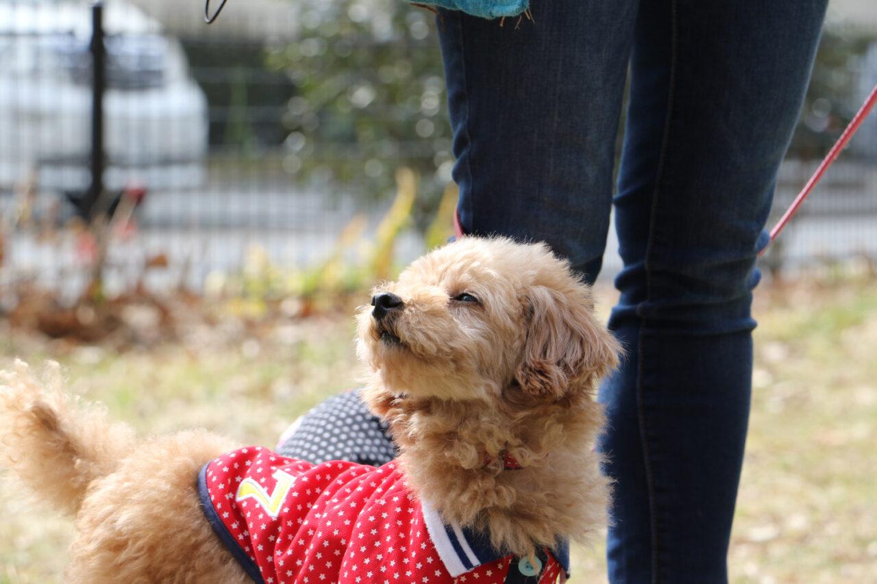 専属トレーナーは、我が愛犬。毎日の犬の散歩ダイエットのコツ&気をつけること