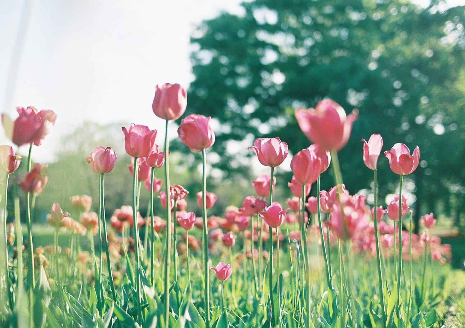 〜春〜 透けるようなむちっとした赤リップ