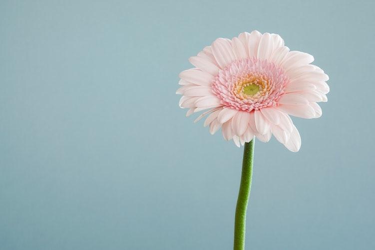 その花が咲いたら、私を思い出すでしょう?