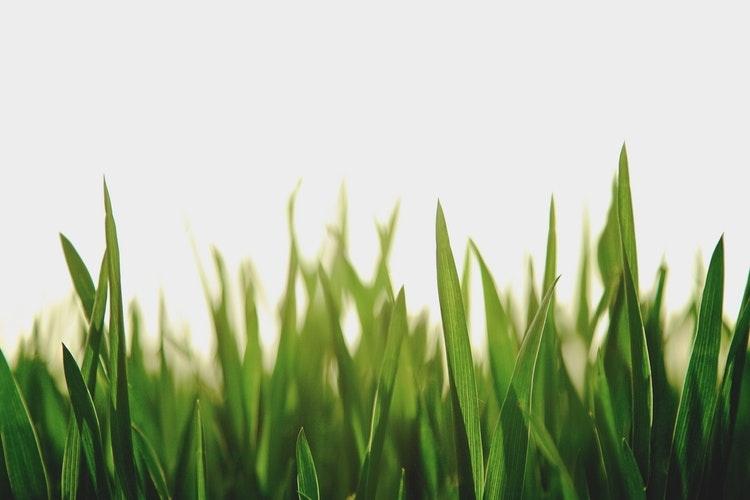 淡いグリーン|最近見かけるイマっぽカラー