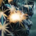 線香花火は人生を表すという。植物にたとえられた燃え方から連想するワタシの夏模様