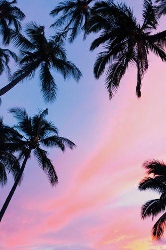 日本でもハワイを感じたい。簡単な方法で南国に行った気分になれる4つの方法とは