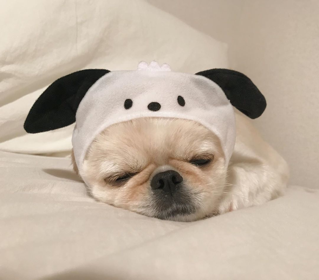可愛いワンちゃんに癒やされて♡犬好きに贈る可愛いインスタのワンワンアイドル!