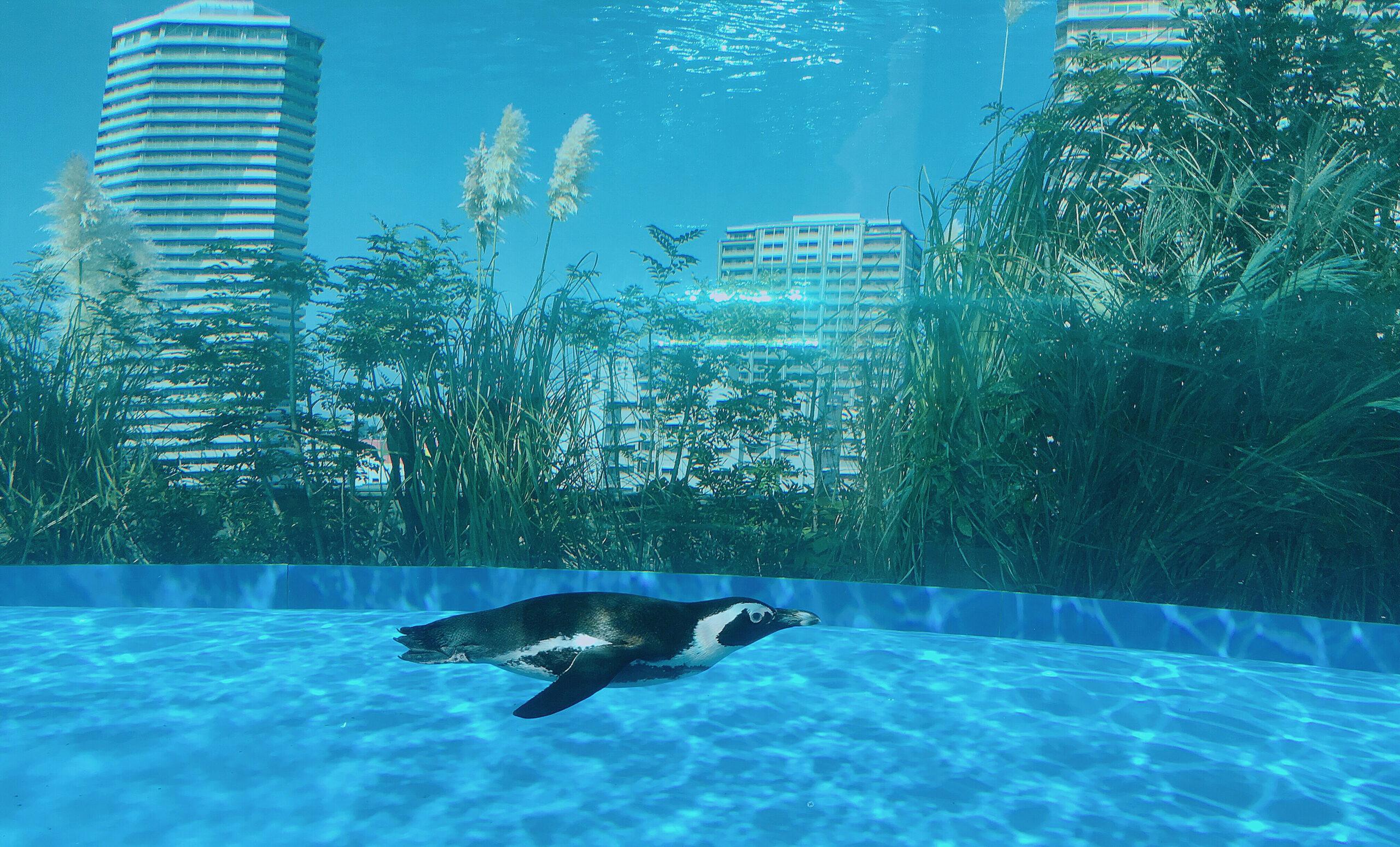 生き物に癒やされる、サンシャイン水族館