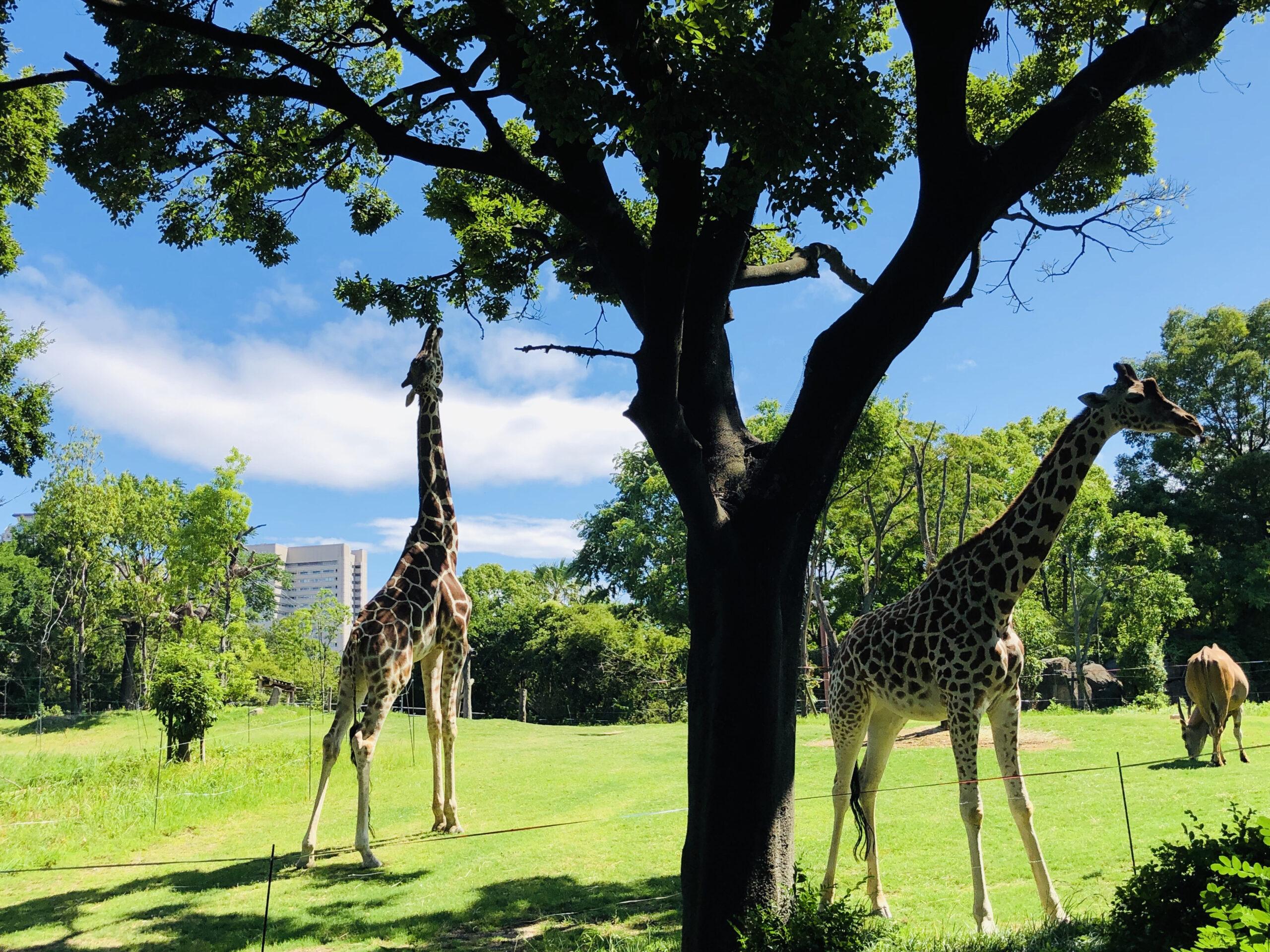 定番を押さえるなら、天王寺動物園