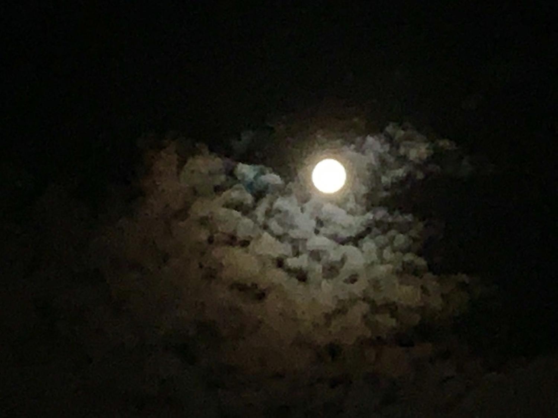 「月がすごく綺麗だね」
