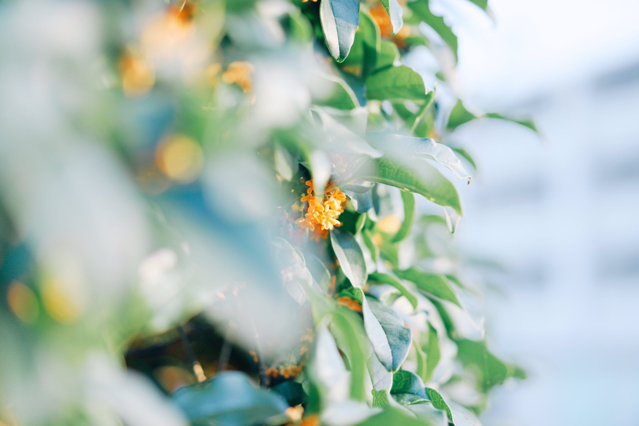 秋になると恋しくなるアノ香り