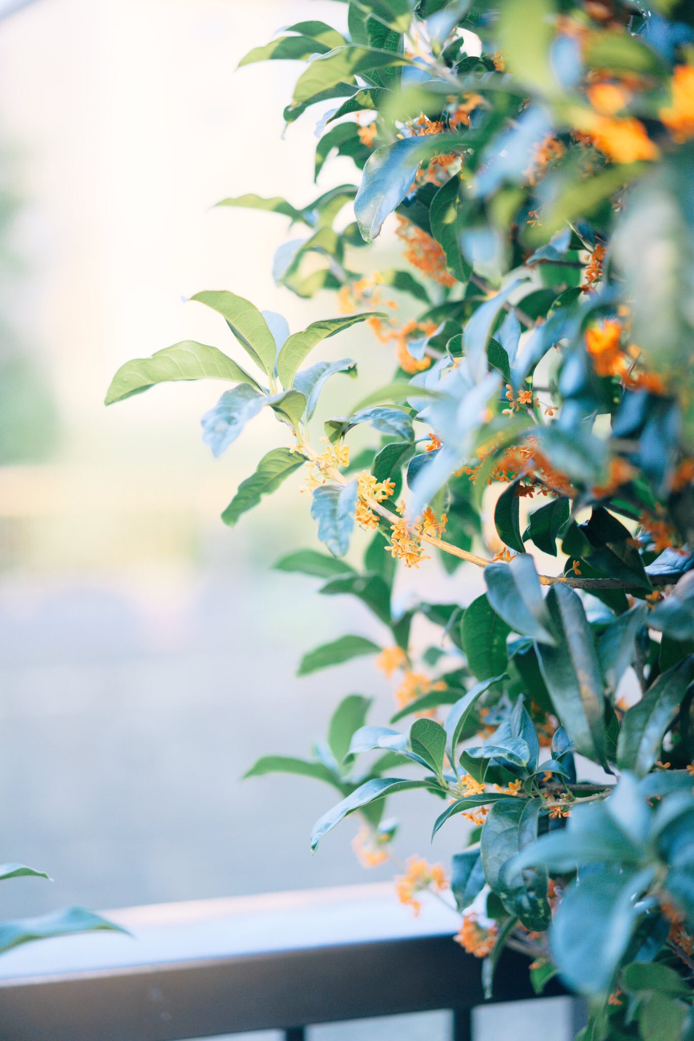 秋の香りを招いて、纏って