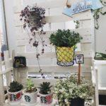 カーテンの向こう、私だけの秘密の花園。一人暮らしのベランダでお花を育てよう!