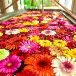 お花が手水に浮かんだ幻想的な世界へ。花手水に出会える神社におでかけしない?