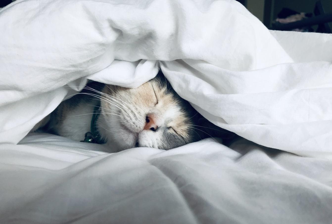 猫系男子が興味あることに興味を持ってみる!