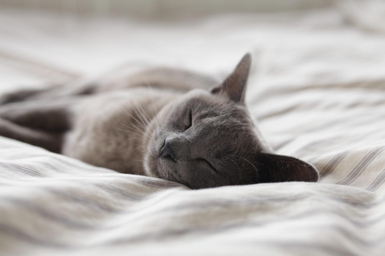 (2)十分な睡眠を取る